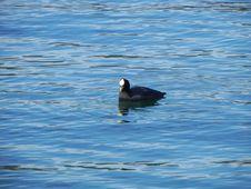 Free Water, Bird, Fauna, Water Bird Royalty Free Stock Photo - 112840585