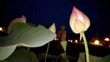 Free Flower, Plant, Lotus, Sacred Lotus Royalty Free Stock Photos - 112840588