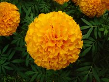 Free Yellow, Flower, Plant, Annual Plant Stock Image - 112840631