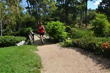 Free Plant, Path, Garden, Botanical Garden Royalty Free Stock Image - 112840706