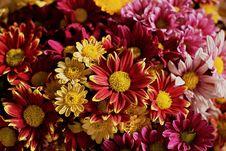Free Flower, Pink, Floristry, Flora Stock Photo - 112840760