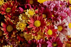 Free Flower, Floristry, Flowering Plant, Plant Royalty Free Stock Photo - 112840855