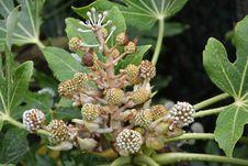 Free Plant, Flora, Subshrub, Herbaceous Plant Stock Photo - 112841000