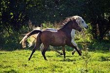 Free Horse, Pasture, Mare, Stallion Stock Photo - 112841040