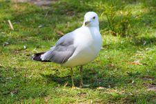 Free Bird, Seabird, Gull, Beak Stock Image - 112841041