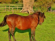 Free Horse, Pasture, Mare, Horse Like Mammal Stock Photos - 112841133