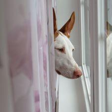 Free White, Dog Breed, Nose, Dog Royalty Free Stock Image - 112841136
