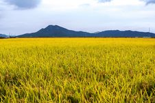 Free Grassland, Paddy Field, Field, Ecosystem Stock Images - 112841314