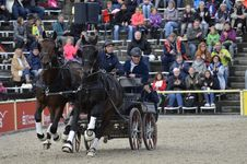 Free Horse Harness, Horse, Horse Like Mammal, Stallion Royalty Free Stock Photography - 112841457