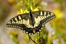 Free Butterfly, Moths And Butterflies, Insect, Brush Footed Butterfly Stock Photos - 112841523