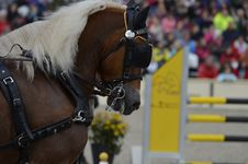Free Horse, Bridle, Horse Harness, Show Jumping Royalty Free Stock Photography - 112841557