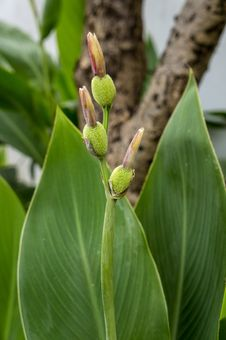 Free Plant, Flora, Leaf, Bud Royalty Free Stock Photo - 112841625