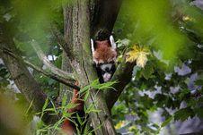 Free Fauna, Mammal, Wildlife, Tree Stock Photo - 112841680
