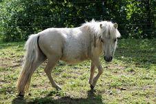 Free Horse, Mane, Pasture, Horse Like Mammal Stock Images - 112841884