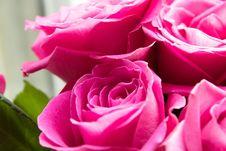 Free Rose, Flower, Rose Family, Pink Stock Photos - 112841903