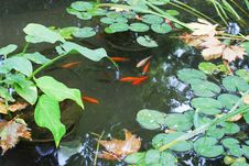 Free Fish Pond, Water, Pond, Body Of Water Stock Photography - 112841912