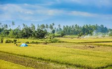 Free Paddy Field, Field, Agriculture, Grassland Royalty Free Stock Images - 112842149