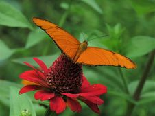 Free Butterfly, Moths And Butterflies, Brush Footed Butterfly, Insect Stock Images - 112842214