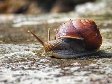 Free Snails And Slugs, Snail, Slug, Molluscs Royalty Free Stock Photo - 112842465