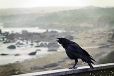 Free Black Bird Perching On Concrete Wall With Ocean Overview Stock Images - 112878174