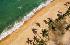 Free Aerial Photo Of Beige With Coconut Trees Royalty Free Stock Images - 112942619