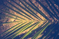 Free Palm Tree Leaf Stock Photo - 112972390