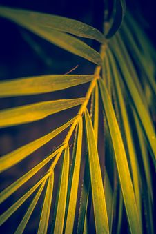 Free Palm Tree Leaf Stock Photos - 112972463