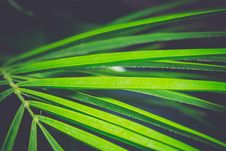 Free Palm Tree Leaf Stock Photography - 112972522