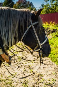 Portrait Of Harnessed Horse Stock Photo