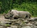 Free Rhinoceros Stock Images - 1133984