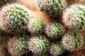 Free Cactus Royalty Free Stock Photos - 1134468