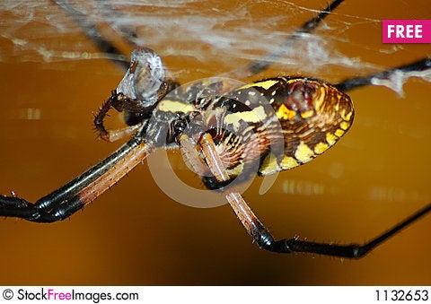 Free Spider Stock Photos - 1132653