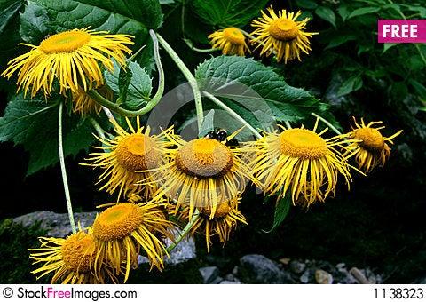 Free Yellow Flowers Bouquet Stock Photos - 1138323