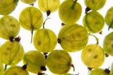 Free Gooseberry-4 Stock Photos - 1130703