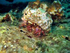 Free Hermit Crab Stock Image - 1131061
