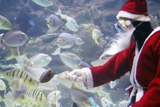 Free Santa Clause Feeding Fishes Royalty Free Stock Image - 1131186