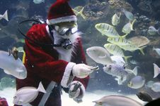 Free Santa Clause Feeding Fishes Stock Photography - 1131192