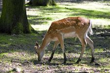 Free The Deer Stock Photography - 1131752