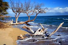 Free Beach, Waves And Driftwood Stock Images - 1133164
