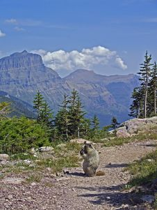 Free Marmot On Trail Royalty Free Stock Images - 1133309