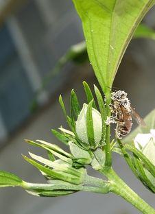 Free Bee Stock Image - 1134161