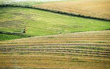 Free Rural Landscape Royalty Free Stock Image - 1134296