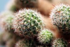 Free Cactus Royalty Free Stock Photography - 1134457