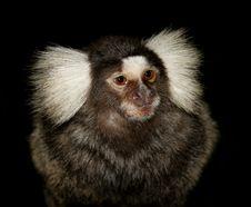 Free Little Monkey Royalty Free Stock Photography - 1136167