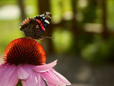 Free Butterfly1 Royalty Free Stock Photo - 1136185