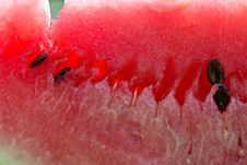 Free Water-melon Stock Image - 1136861