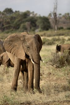 Free African Elephant Stock Photos - 1138693