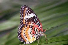 Free Butterfly Stock Image - 1138891