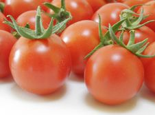 Free Fresh Tomatoes Stock Images - 1139744