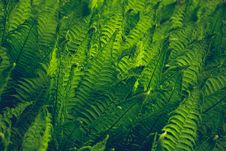 Free Close-Up Photography Of Fern Stock Image - 113036011